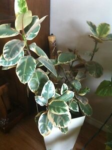 Beautiful and healthy house plants