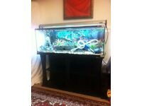 Aqua one fish tank and matching stand