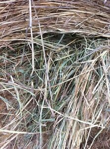 Cow Hay for sale Williams Lake Cariboo Area image 4