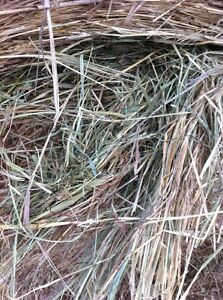 Cow Hay for sale Williams Lake Cariboo Area image 5