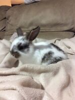 Cute Baby bunnies looking for loving homes.