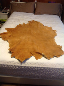 Home tanned elk hide