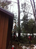 Dangerous tree removal,land clearing,fire wood cutting,