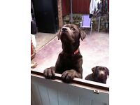 Dog walker/ sitter (cats also)