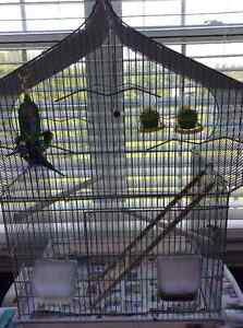 STILL AVAILABLE 2 Budgie Birds and Cage for Sale