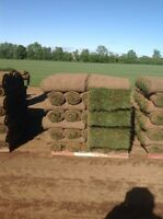 Premium Kentucky blue grass sod 720 sq ft  free delivery