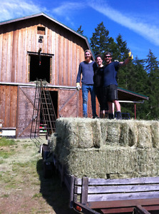Hay - Good Quality Square Bales