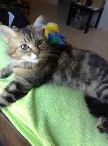 Cat to give away to a good home