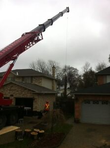 Tip Top Tree Removals and Services Cambridge Kitchener Area image 4