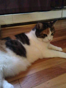 Fixed declawed female cat to give away to a good home