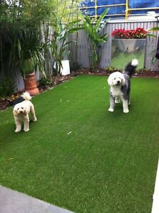Dogs Backyard clean up no more holes or dead patches ! Archerfield Brisbane South West Preview