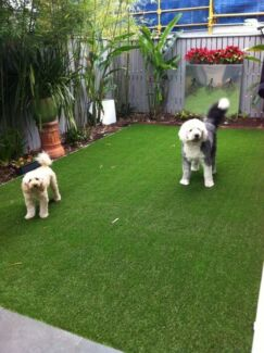 Dogs Backyard clean up no more holes or dead patches !