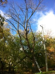 Tip Top Tree Removals and Services Stratford Kitchener Area image 1