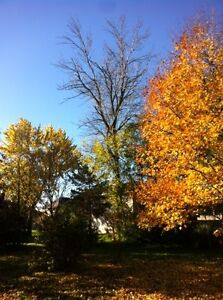 Tip Top Tree Removal and Services London Ontario image 3