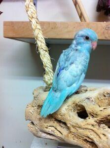 Bébé touis céleste bleu pastel