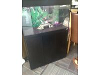 Fluval 125 liter fish tank for sale,Full set up