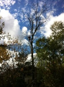 Tip Top Tree Removals and Services Cambridge Kitchener Area image 3