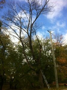 Tip Top Tree Removal and Services Kitchener / Waterloo Kitchener Area image 2