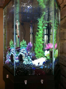 30 Gallon Fish Tank and Accessories for Sale