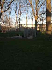 Abby's Boarding Kennel London Ontario image 3