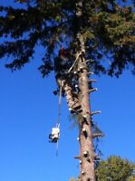 Tree removal call now