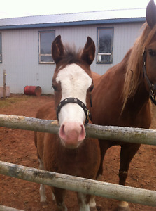 5 month old filly