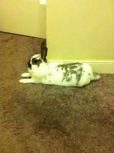5 year old bunny for sale