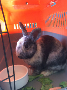 Lapin Trouve / Found Rabbit