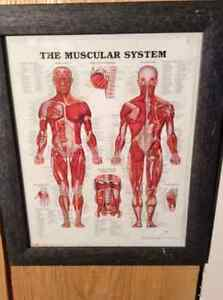 Framed medical prints