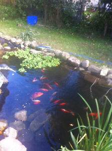 Pond Liner *** Make your landscaping one to desire this spring Kitchener / Waterloo Kitchener Area image 1