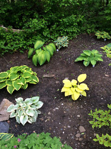 Specialty Hosta collection for sale, *** Updated List