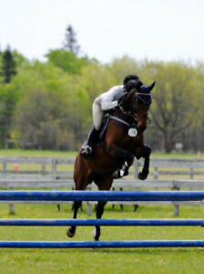 Scopey 10 Year Old WB Jumper Gelding For Sale