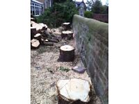 Tree surgeon/arborist central Scotland Glasgow Lanarkshire west lothi