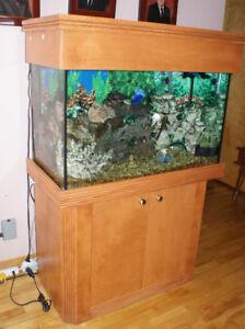 Aquarium +/- 50 gallons