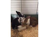 Rabbits, cage, extra