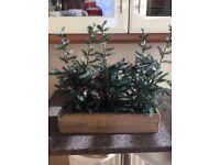 Next window box - 3 Christmas trees
