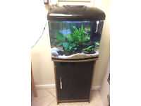 Aqua One Aqua Vue 480 fish tank and stand, heater and ornaments - Ferndown, Dorset