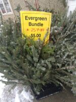 Evergreen Bundles FONTHILL RESTORE St. Catharines Ontario Preview