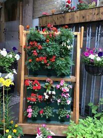 Miniature garden planted planter hanging baskets