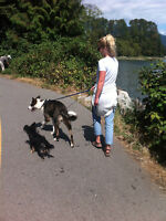 Nelson Dog Walking Service