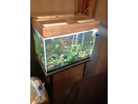 Aquarium 2ft fish tank with stand,with accesories,,,