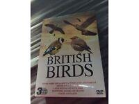 British Birds DVD