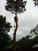 Anytime Tree Removal
