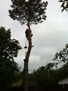 Anytime Tree Removal Moose Jaw Regina Area image 1