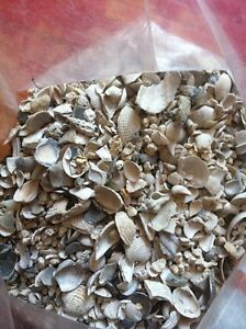 Arban Sea Shell Cichlid substrate, Buffers your PH!