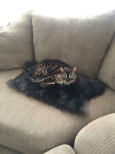 These two brothers are searching for a new perfect home.