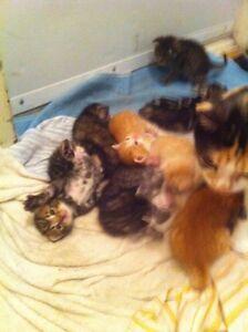 8bebe chat à donner