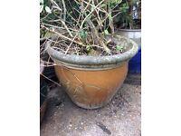 Large ceramic plant pot