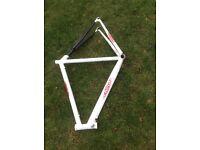 Road bike Frame - Echelon Size Large