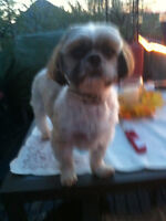 Sherlon's Dog Grooming